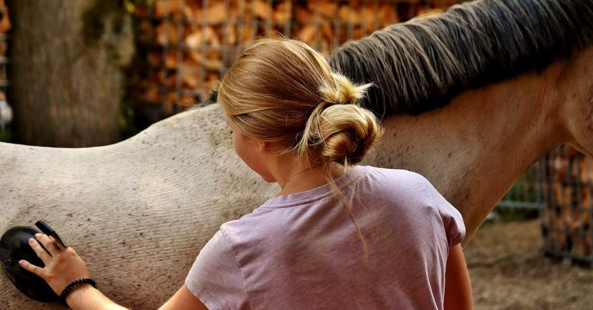 Horse nurturing - veterinary medical devices regulation